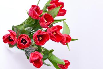 Tulipani su sfondo bianco