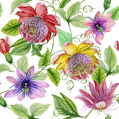 Beautiful passion flowers (passiflora) on climbing twigs with leaves and tendrils on white background. Seamless floral pattern. Watercolor painting. Hand painted illustration.