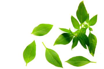 Fotobehang Natuur Basil leaf on white background