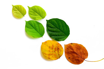 Set of leaves on white background