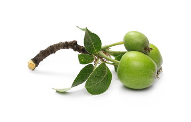 Organic small, green apples with leaves and twig isolated on white background