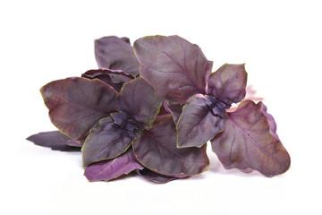 Fresh violet basil