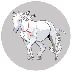 White horse with a red ornament on the neck.
