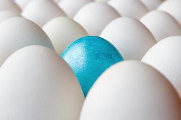 Blue easter egg among white chicken eggs in cardboard tray