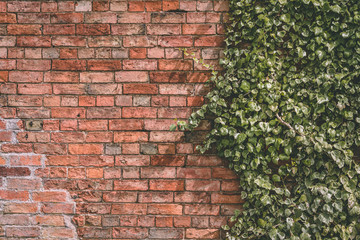 Red Brick Wall with Ivy