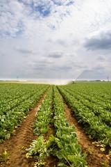 Watering Crops