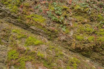 Felswand mit Moos bedeckt