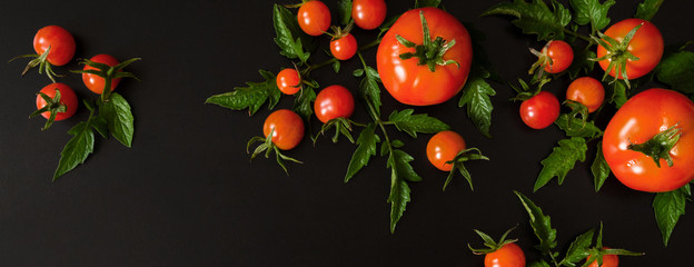 Fresh vegetables tomato and fragrant greens salad, parsley, basil on a dark background, concept of vegetarianism and healthy eating. Flat black background long baneer