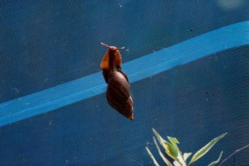 A snail is seen at a snail farm at Nakhon Nayok Province