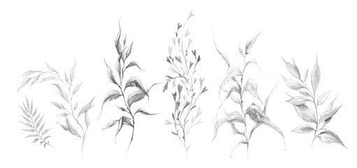 Collection of pencil drawing wild herbs