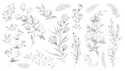 Wild flowers and herbs pencil sketch Wall mural