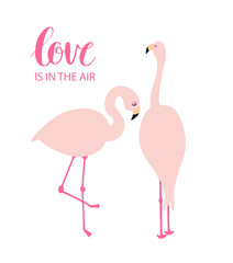 Two pink flamingos in love