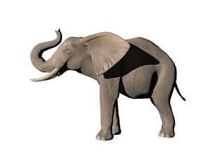 Elefant mit Stoßzähnen
