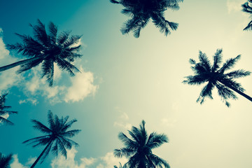 Coconut palm trees - Tropical summer breeze holiday, Retro tone