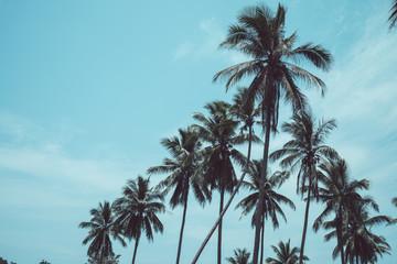 Coconut palm trees - Tropical summer breeze holiday, Retro tone