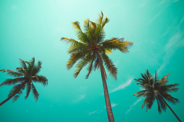 Coconut palm trees - Tropical summer breeze holiday, Vintage tone