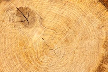 cut oak wood background