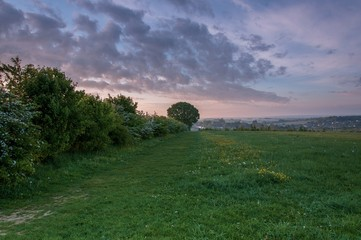 Photo sur Plexiglas Lavende A hedgerow and tree at sunrise in the English countryside