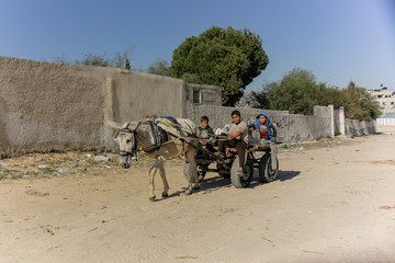 Gaza Strip, Palestine. Children ride on a donkey cart.