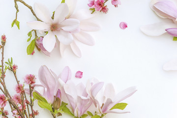 Beautiful background with pink magnolia flowers and peach blossom on white backgroud with copy space
