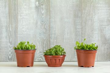 Spring gardening light concept