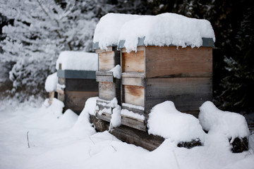 Germany, Snow-covered beehives on farm