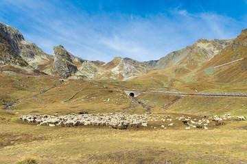 Bergpass mit Schaafherde am Col de L'iseran