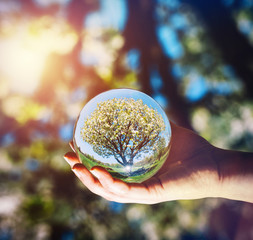 A tree and bright blue sky reflecting in a glass sphere