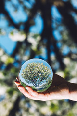 A tree and bright blue sky reflection in a ball