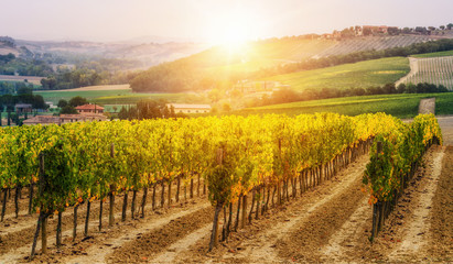 Foto op Canvas Wijngaard Vineyard landscape in Tuscany, Italy.