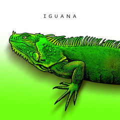Green iguana - illustration in engraving style. A bright close-up image of large herbivorous lizard a side view.