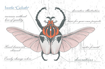 hand-drawn Goliath beetle with skull wings