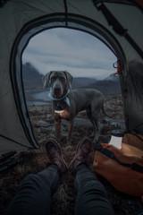 Dog outside a tent