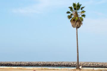 Lone palm tree Wall mural