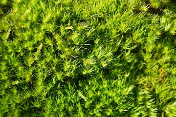 Bright green moss.