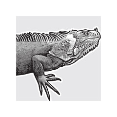Realistic portrait of iguana - vector graphic illustration.