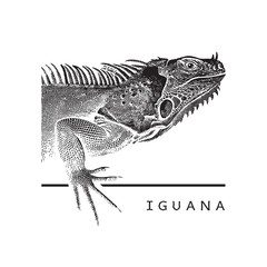 Vector graphic image of iguana.