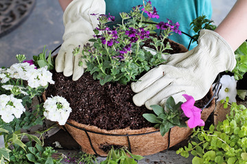 Tutorial of Girl Planting a Hanging Basket of Flowers