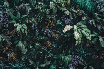 Naklejka premium Ściana przyrody tropikalnej w dżungli