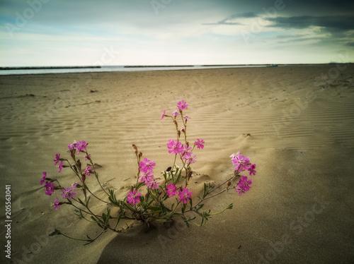 Fiori Rosa Sulla Spiaggia Con Mare E Cielo Sullo Sfondo Stock Photo