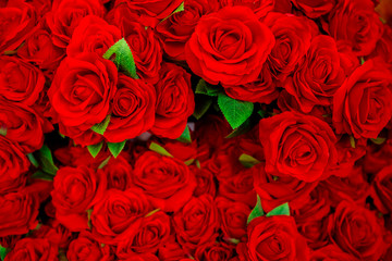 Rose - Flower, Flower, Valentine's Day - Holiday, Backgrounds, Red
