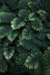 leafs fern rain drops tropical top view nature background dreen fine art fresh sweet cool new