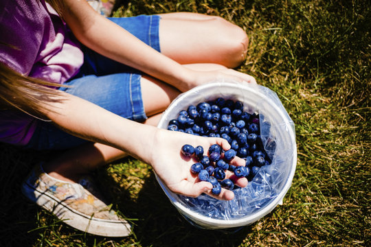 Low section of girl with blueberries in bucket sitting on field at farm