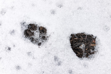 Macro closeup of fox tracks in backyard of house on snow covered ground after blizzard white storm in Virginia suburb