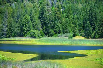 Mountain run-off creates a valley of wetland.