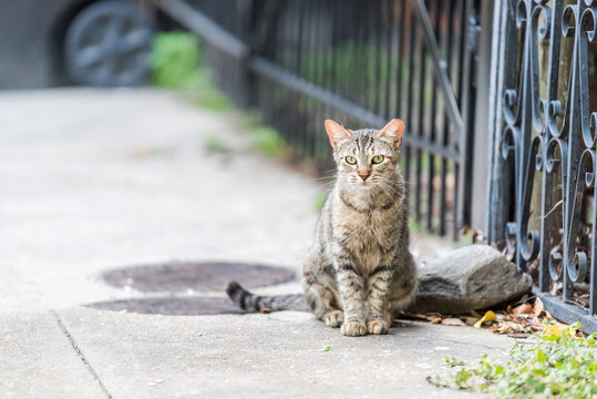 Stray tabby cat with green eyes sitting on sidewalk streets in New Orleans, Louisiana by metal fence
