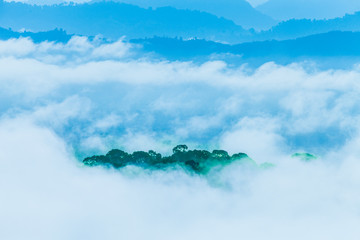 In the morning the cold weather is make floating fog on the mountain as a sea of mist.