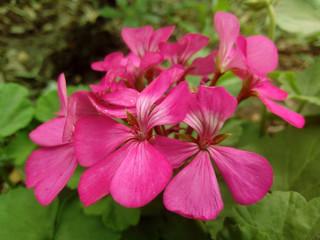 flores de jardín público