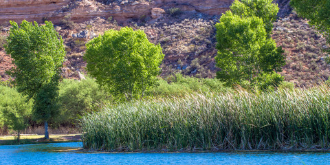 Cottonwood trees and marsh reeds against a beautiful stone cliff beside the blue lagoon at Dead Horse Ranch State Park near Cottonwood, Arizona