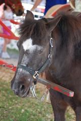 Donkey-Mule